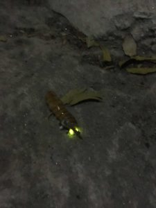 We came across this cool GLOW BUG!